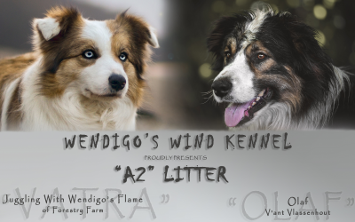 01.12.2020 – A2 litter is here!